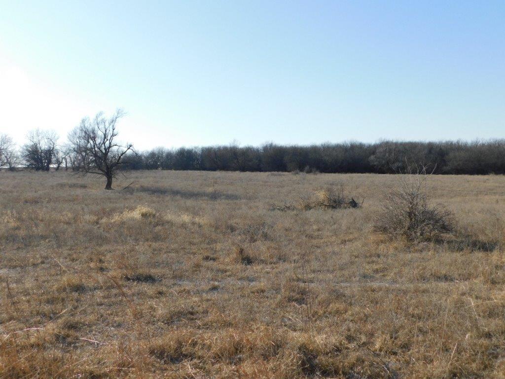Open field 8