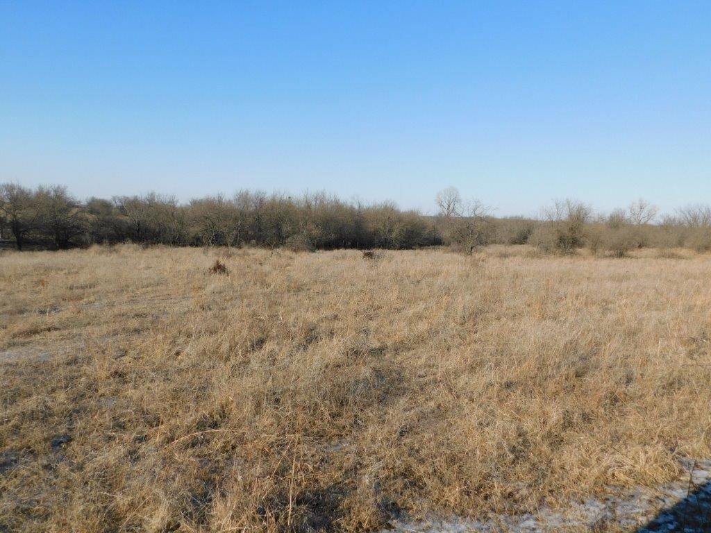 Open field 6