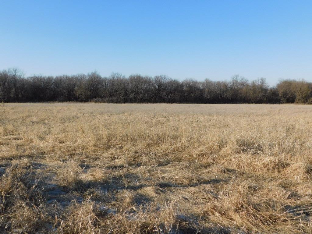 Open field 1